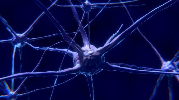 ¿Qué es la Neuroplasticidad?